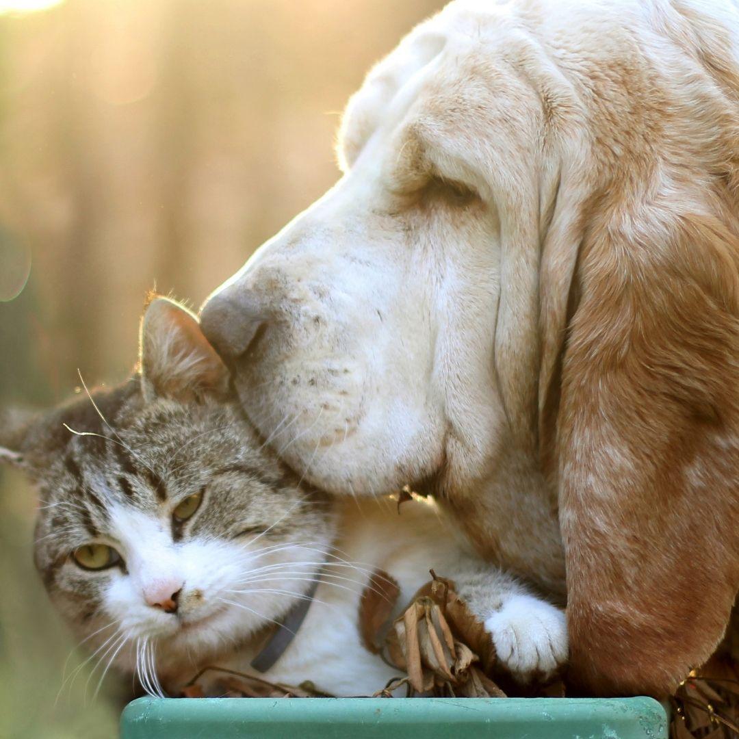 Veterinary Jobs